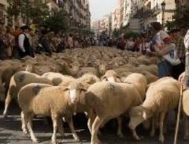 Las ovejas llegan a las calles del centro de Madrid