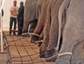 Piden que el circo 'Ringling' no actúe en Madrid