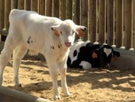 El Zoo estrena granja y huerto
