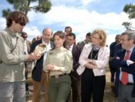 Se instalan madrigueras para recuperar las rapaces en Sevilla la Nueva