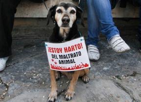 Presentan una ILP para prohibir sacrificar animales abandonados
