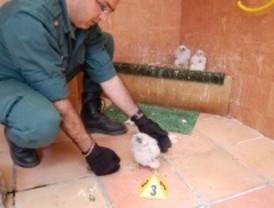 Detenidos por comerciar con aves protegidas