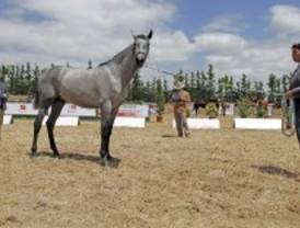 Madrid celebra un concurso de caballos de pura raza