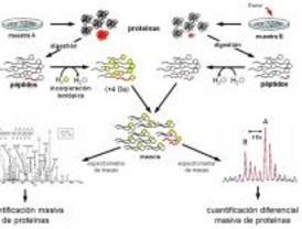 Avances tecnológicos en Proteómica para estudiar enfermedades