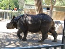 El rinoceronte y el megaterio