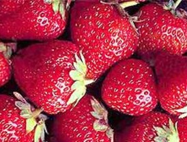 Fresas más duraderas y nutritivas