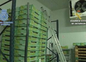 Cae una red que introducía cocaína en contenedores de fruta