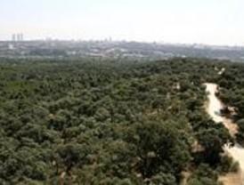 Ecologistas desaconsejan hacer deporte en la Casa de Campo por el ozono