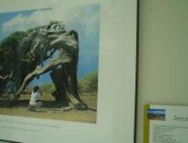 Exposición sobre los 'Reyes del Bosque' en Montecarmelo