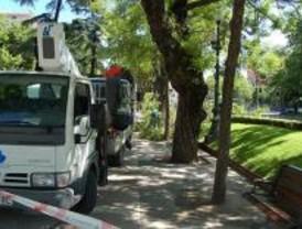 Más de sesenta calles se verán afectadas con cortes de tráfico por trabajos de arbolado