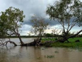 Simulaciones para minimizar el efecto de inundaciones