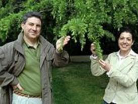 Caja Madrid edita una guía con los 100 árboles más singulares de España