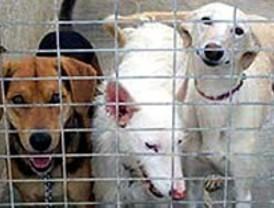 Castro cede una perrera a la activista en huelga