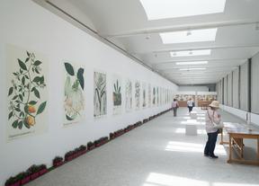 Ampliaciones de la exposición de dibujos de la exposición de la colección de Mutis, Nuevo Reino de Granada (1783-1816), en el Jardín Botánico de Madrid.