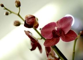 El Parque del Oeste se llena de orquídeas