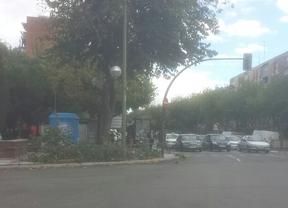 Cae una rama en Marqués de Corbera en una noche con múltiples incidencias por la lluvia