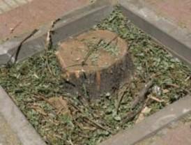 El Consistorio no da explicaciones de la tala de árboles cercana a Moncloa