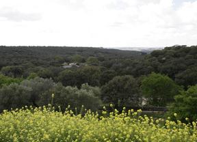 Monte El Pardo