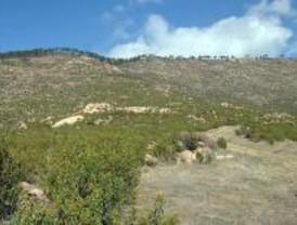 La Comunidad reforesta el Monte de Valdemaqueda
