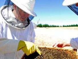 Los Bomberos realizan 400 traslados de enjambres de abejas