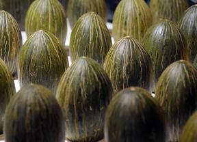 El melón Mochuelo de Villaconejos, estrella del mercado de la Cámara Agraria