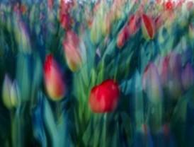 Primavera al cuadrado en el Espacio de las Artes