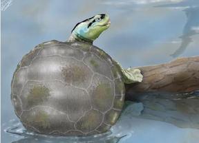 Ilustración de 'Hylaeochelys kappa', una tortuga con costumbres nadadoras