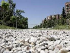 PSOE denuncia la impunidad de la tala de Barajas