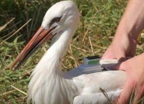 SEO/BirdLife celebra el Día de las Aves con 500 actividades