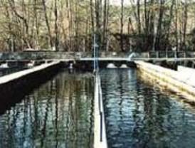 Dos de los fallecidos en una piscifactoría de Guadalajara serán enterrados en Boadilla