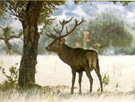 La Comunidad prohíbe cazar fuera de los cotos