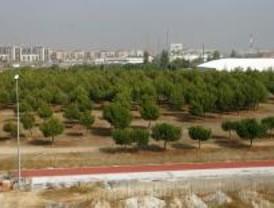 Los verdes de Alcorcón dicen que el pinar de Santo Domingo peligra por el deporte