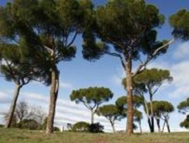 Vecinos plantarán árboles para exigir un Plan Director para la Dehesa de la Villa