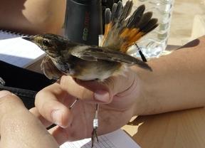 MADbird Fair, una feria para los amantes de la naturaleza