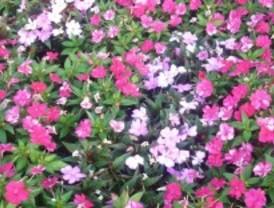 Pozuelo, a todo color en primavera