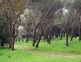 IU denuncia la muerte de más de 100 árboles en la Huerta de la Partida