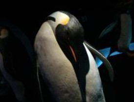 Faunia organiza una actividad donde los niños podrán dormir con los pingüinos