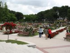 Los madrileños podrán elegir su rosa favorita entre 51 variedades