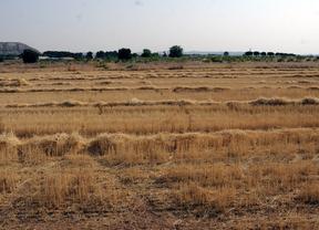 Los agricultores madrileños recibirán un 11% más de ayudas europeas