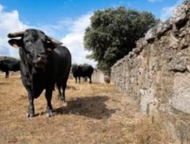 La Comunidad promociona en Guadarrama su mejor carne