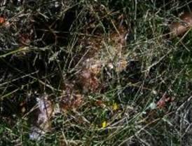Los vecinos de Puente de Toledo denuncian plagas de ratas