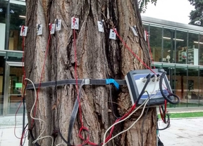 Tomógrafo utilizado para analizar los árboles del Retiro