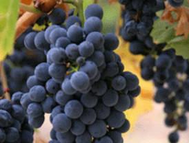 La Cámara asesora en exportación a las empresas vinícolas de la Sierra Oeste