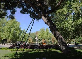 Parque Retiro, árbol con una sujección metálica para evitar que su inclinación le haga caer por el peso
