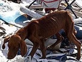 Un total de 16.988 perros fueron abandonados en Madrid durante el pasado año