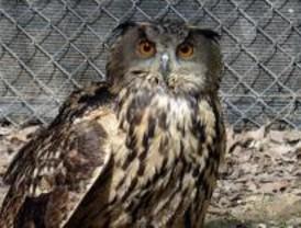3.460 animales silvestres heridos fueron rescatados en 2009 en la Comunidad