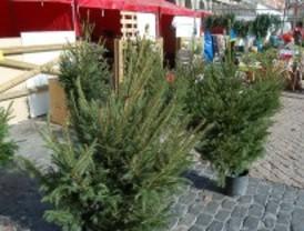 Arranca la recogida de árboles de Navidad