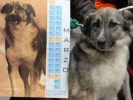 Diez perros y dos gatos son los protagonistas del calendario 2009 de El Refugio