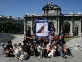 El Refugio reivindica el acceso de perros a las playas