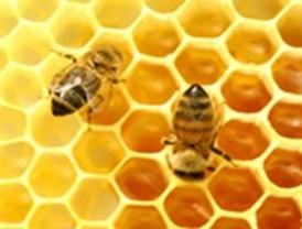 Mejorar la competitividad de las empresas apícolas europeas